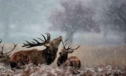 Wildlife Winter Wallpapers