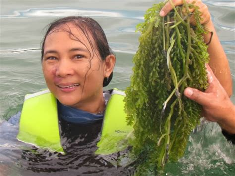 Health First and Be Happy!: Nutritious Sea Grapes