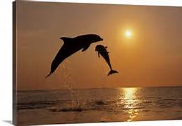 Dolphins Jumping in Th...