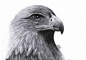 Hawk by Axichan on DeviantArt