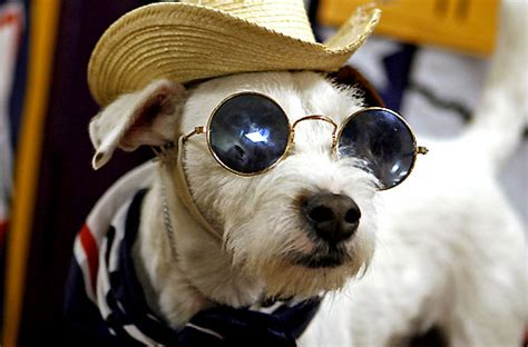 Dogs Wearing Sunglasses New 2013 Pictures  Funny And Cute