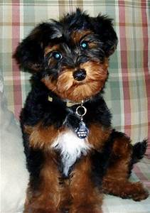 21 Best images about cross-breeds (dogs) on Pinterest ...