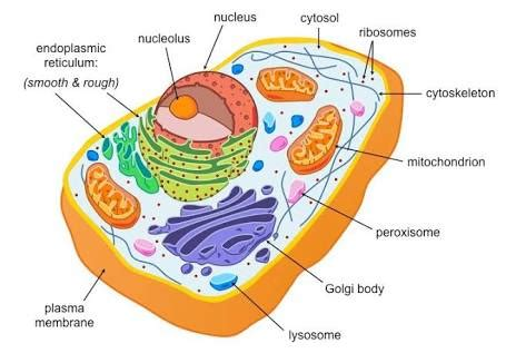 All The Plant Cell Animal