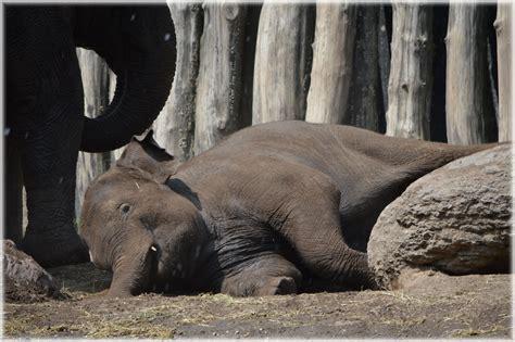 elephant tub india in the bath tub with the elephants 09 free stock photo