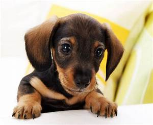 Cute Small Dogs That Stay Small - Dog : Pet Photos Gallery ...
