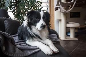 Hund Im Garten Vergraben : lou s blog borderlou border collie blog ~ Lizthompson.info Haus und Dekorationen