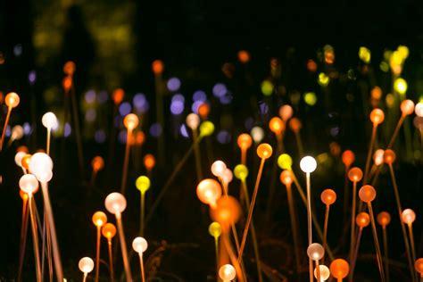 bruce munro light   garden architectural lighting