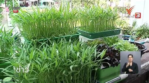ปลูกผักบุ้งจีนในตะกร้าโตในน้ำ-โตไวดูแลไม่ยุ่งยาก   สวนป่า ...