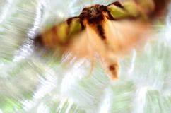 Tache De Couleur Peinture Fond Blanc : portrait noir et blanc sexy de femme en peintures image stock image du magnifique fond 37422621 ~ Melissatoandfro.com Idées de Décoration