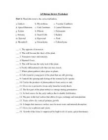 Photosynthesis Diagram Worksheet Answers Cellular Respiration Worksheet Answer Key