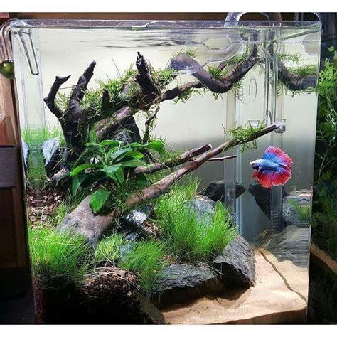 aquascape fish tank aquascape with driftwood and rocks aquarium ideas