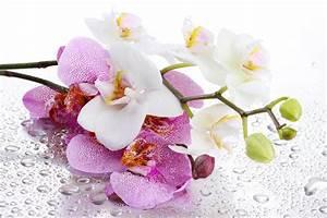 Orchidee Klebrige Tropfen : fotos orchideen blumen tropfen gro ansicht 5184x3456 ~ Lizthompson.info Haus und Dekorationen