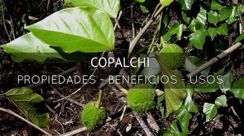 beneficios propiedades  usos del copalchi