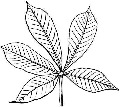 Coloring Clip by Palmate Leaf Clipart Etc