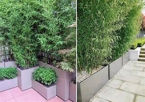 Bambou En Pot Pour Terrasse : bambou en pot brise vue naturel et d co sur la terrasse ~ Louise-bijoux.com Idées de Décoration