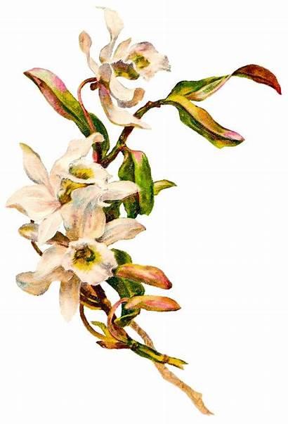 Funeral Flowers Flower Clip Clipart Transparent Christmas