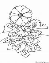Zinnia Garden Coloring Pages sketch template