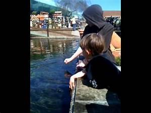 Gabriel, Finn, Warren and the Fish! - YouTube