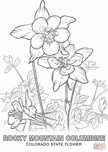 Coloring Flower Colorado State Pages Columbine Printable