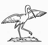 Stork Storks Coloringbay sketch template