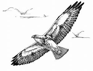 Sketches Of Birds In Flight Coloring Pages