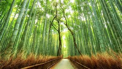 Bamboo Japan Forest Nature Path Desktop Landscape