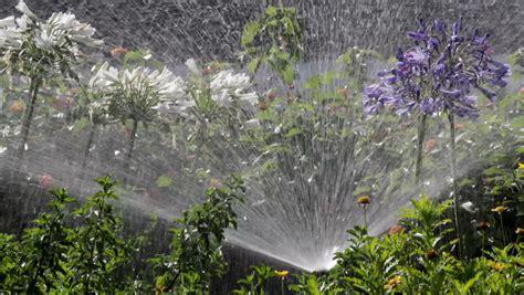 Garden Irrigation Spray Watering Flower Bed Stock Footage