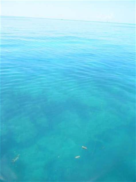 Glass Bottom Boat Key West Tripadvisor by Key West Glass Bottom Boats Fl Anmeldelser Tripadvisor