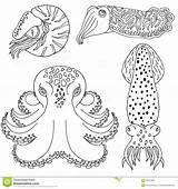 Coloring Cephalopods Cuttlefish Drawn Hand Octopus Nautilus Designlooter 4kb 1300 Vector sketch template