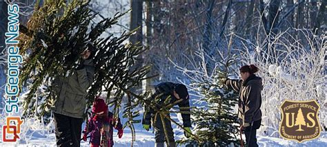 utah christmas tree permits where how to get tree cutting permits for utah s national forests cedar city news