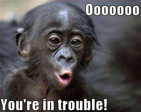Meme Monkey - 10 funny monkey memes for your face