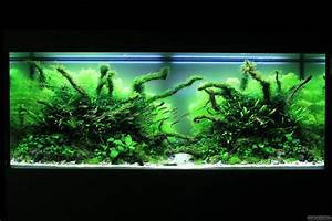 Co2 Rechner Aquarium : wood glade flowgrow aquascape aquarium database ~ Orissabook.com Haus und Dekorationen