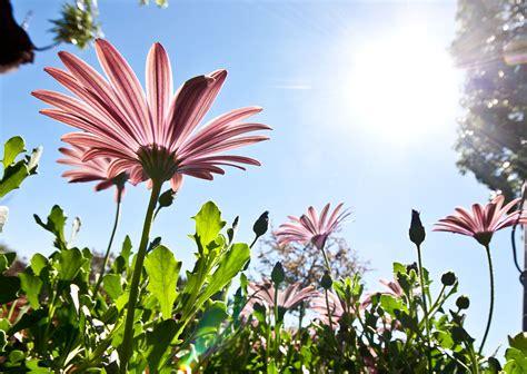 nomi di fiori maschili fiore nome