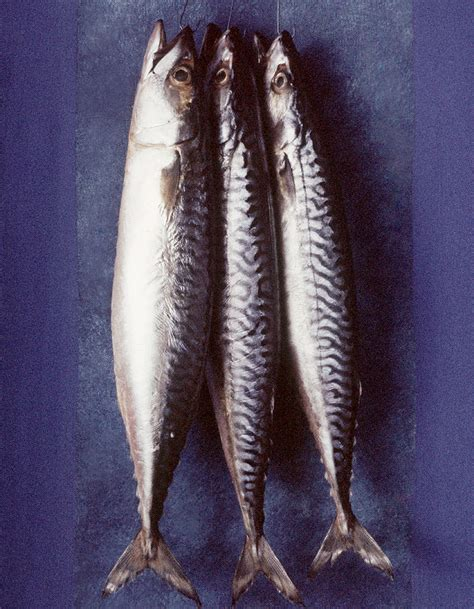 cuisiner du cabillaud au four les viandes et poissons maigres que cuisiner en hiver
