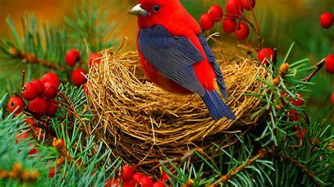 lovely birds wallpaper wallpapertag