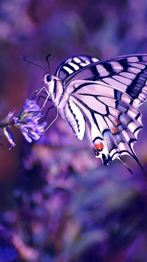 aesthetic butterfly iphone wallpapers wallpaperboat
