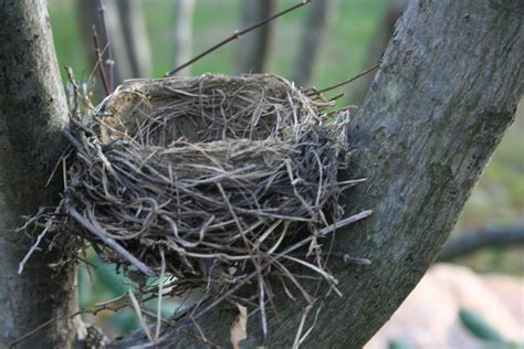 nest with birds pictures delco daily top ten top 10 the bird nest