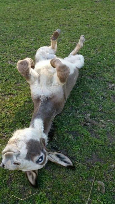 donkey    luvbat