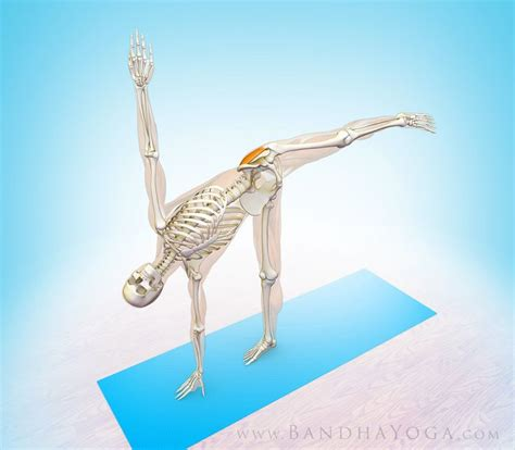 Boat Pose Weak Hip Flexors by 58 Best Gluteus Medius Images On Pinterest Physical
