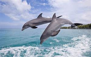 Delfines, Im, U00e1genes, Y, Fondos, De, Delfines, Wallpapers