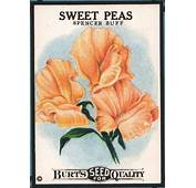17 Best Images About SEED PACKETS On Pinterest  Seed