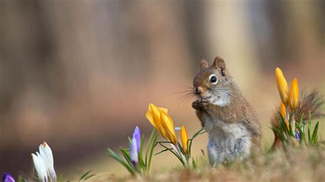 squirrel wallpapers  wallpapers