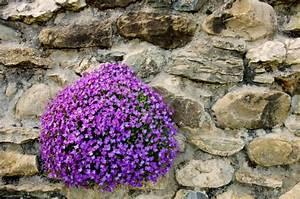 Welche Pflanzen Eignen Sich Für Einen Steingarten : 174 besten stauden bilder auf pinterest ~ Michelbontemps.com Haus und Dekorationen