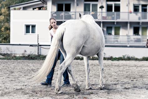 Hinterhand Trainieren Pferd Bodenarbeit