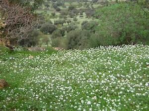 Es Grünt So Grün : es gr nt so gr n foto bild landschaft cker felder wiesen natur bilder auf fotocommunity ~ Eleganceandgraceweddings.com Haus und Dekorationen
