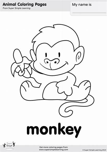 Zoo Monkey Coloring Let Simple Jungle Songs