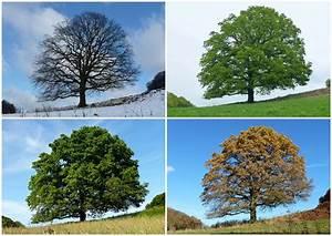 Bäume Umpflanzen Jahreszeit : datei b ume jahreszeit wikipedia ~ Orissabook.com Haus und Dekorationen