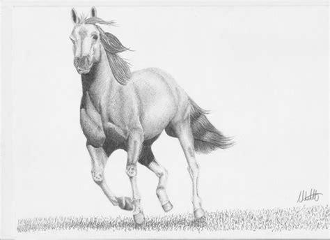 facile bambino cavallo disegno disegno a matita cavallo forum natura mediterraneo