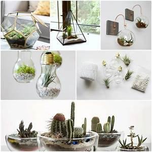 Pflanzen Zu Hause : wie baue ich ein terrarium pflanzen und passende glasgef e ~ Markanthonyermac.com Haus und Dekorationen