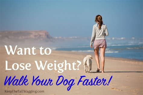 Want To Lose Weight? Walk Your Dog Faster  Keep The Tail Wagging